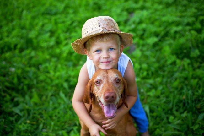 Венгерская выжла – общительный, дружелюбный и добродушный пес, который непременно найдет общий язык с детьми