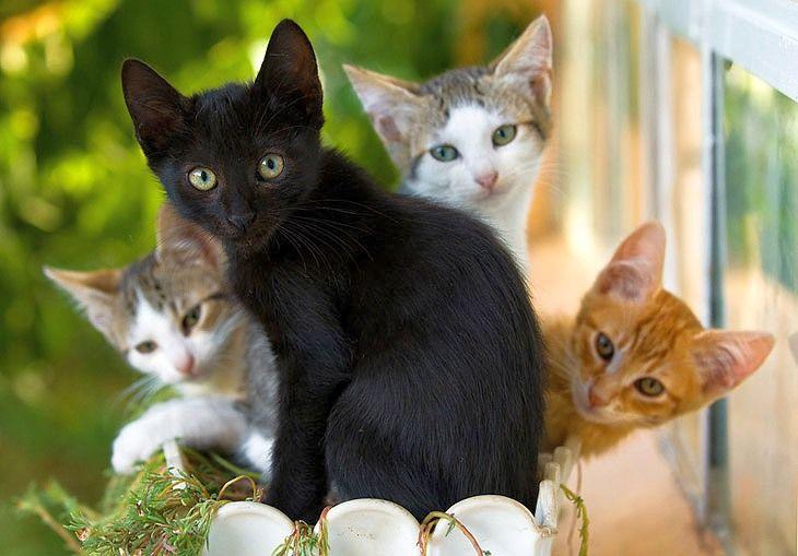 Явившись во сне, кошка с котятами мирно спящих на своем месте, означает иллюзию вашей безопасности.
