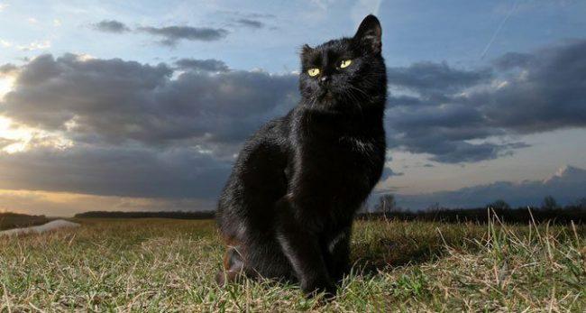 Если черная кошка приснилась с ночи понедельника на вторник, то это явное предостережение об опасности, а вот с пятницы на субботу животное предвещает вам получение большой суммы денег