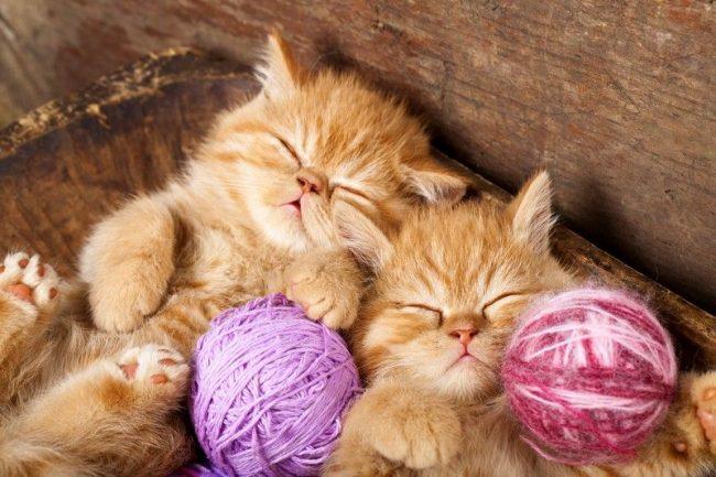 Коты и котята снились