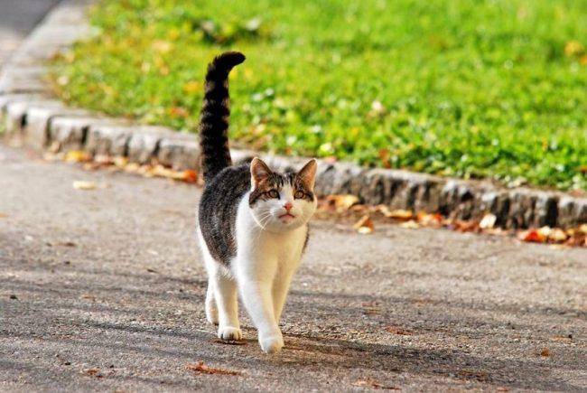 """Нет однозначного ответа на вопрос """"к чему снятся кошки?"""". Все зависит от ее действий в вашем сне. Например, увидеть идущее навстречу животное означает встречу с врагом"""