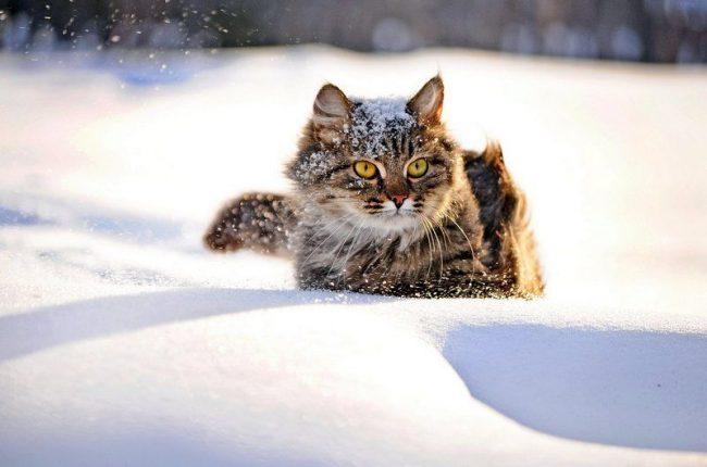 Приснились дикие коты