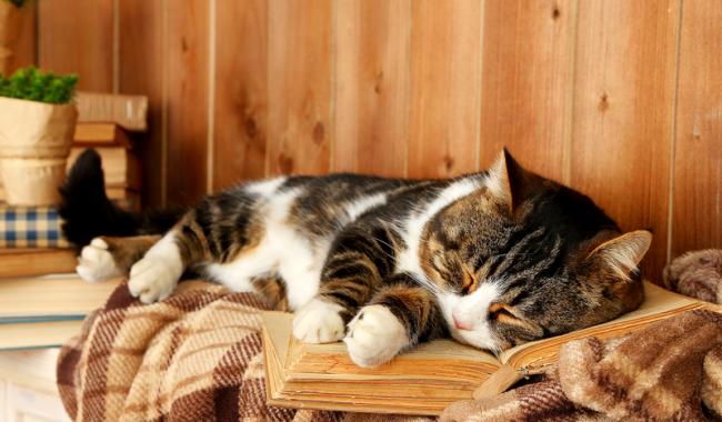 """Ели вы хоть раз задавались вопросом """"к чему снятся кошки?"""", эта статья для вас"""