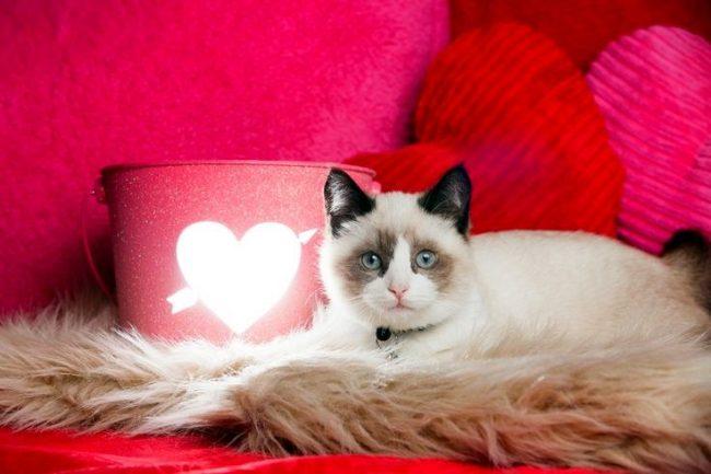Большинство сонников трактуют появление кошки во сне, как предвестие неприятностей. Будут они большими или маленькими, зависит от поведения кошки в вашем сне