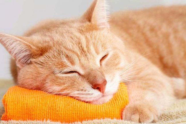 Прелестная рыжая кошка, гуляющая по вашему сну, сияет ложью и обманом вашего окружения. Постарайтесь поменьше выделяться среди друзей, чтобы не столкнуться с грубостью и агрессией