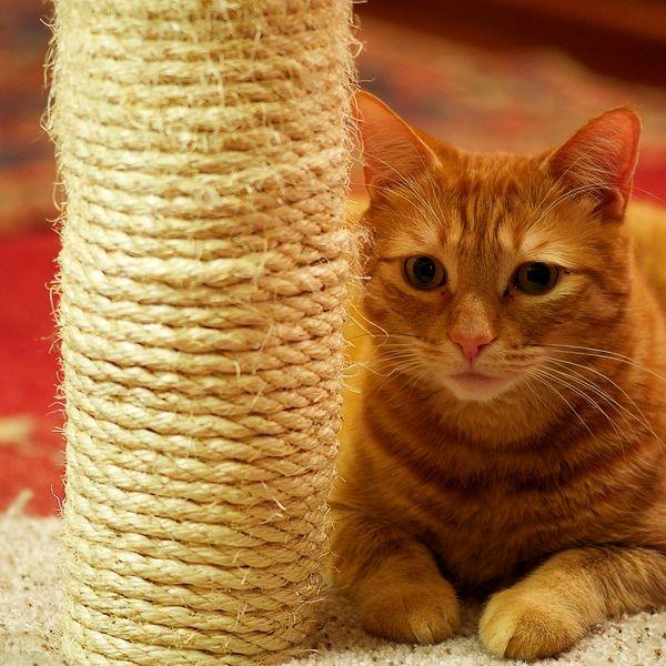 совсем необязательно бежать в зоомагазин и покупать изысканные произведения искусства в виде целых деревянных пролетов для наточки когтей. Простейшую модель когтеточки можно построить и самостоятельно. В этой статье вы узнаете, как смастерить когтеточки для кошек своими руками