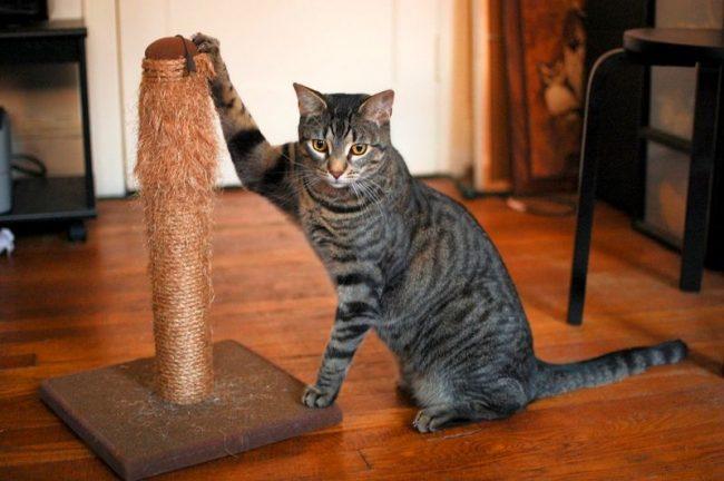 Видя, во что превращается обивка мебели после нескольких сеансов кошачьего маникюра, стоит подумать о надежности и прочности материалов для когтеточки для кошек