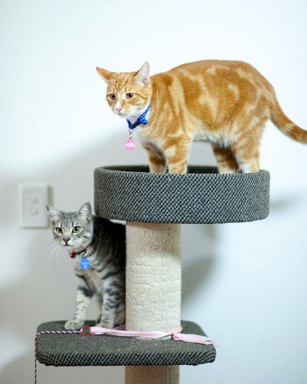 Часто когтеточки для кошек выглядят как целый комплекс. Если у вас получилось смастерить простейший вариант, можете попробовать изготовить что-то более интересное
