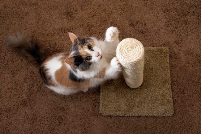 Теперь вы знаете, что изготовить когтеточки для кошек своими руками очень просто. Приступайте к работе!