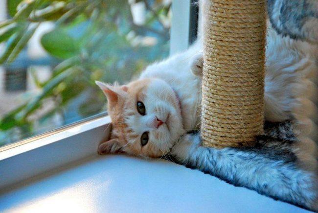 Когтеточки для кошек должны быть полноценным заменителем сеанса маникюра