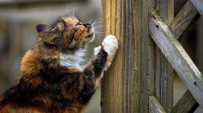Когтеточки для кошек. В естественной среде большие и малые хищники семейства кошачьих стачивают когти об стволы деревьев, домашним кошечкам стоит предоставить специальные когтеточки, дабы избежать порчи мебели