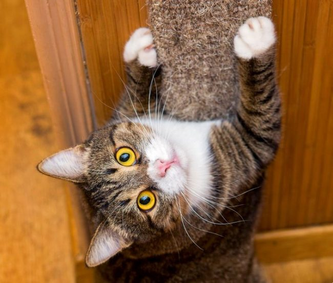 Еще один простой вариант когтеточки для кошек - обмотанный бечевкой брусок, просто прислоненный к стене