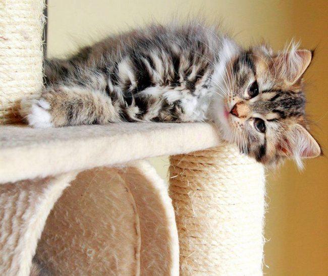 Если вы покупаете кошачий многоуровневый комплекс, скорее всего, там уже будет встроена когтеточка. Но ведь своими руками сделать интересней, правда же?