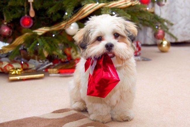 Для кого-то собака - это подарок, но а собаке важны свои маленькие подарочки