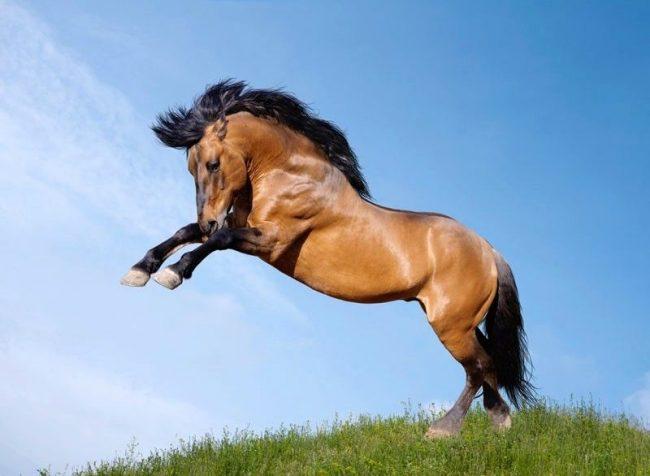 Самыми элегантными и грациозными животными признаны лошади. А пальму первенства, конечно, держат дикие лошади. Мустанг – свободный, гордый и непокорный