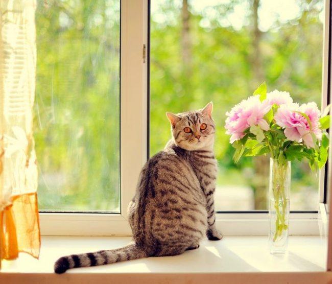 Ошейник от блох и клещей для кошек поможет сохранить здоровье вашей кисы