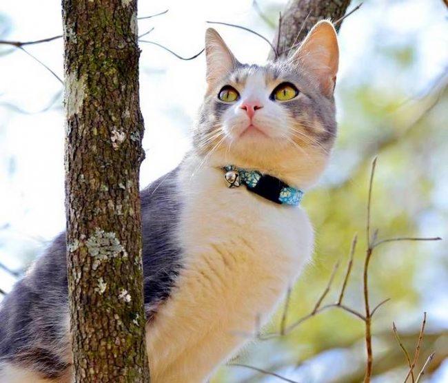 Ошейник от блох и клещей для кошек нужен, в первую очередь, тем мурлыкам, которые периодически гуляют на улице и общаются с другими животными