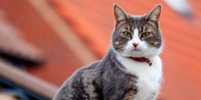 Обязательно проверяйте срок годности изделия, залежалый товар может не только не избавить кошку от блох, но и навредить ее здоровью