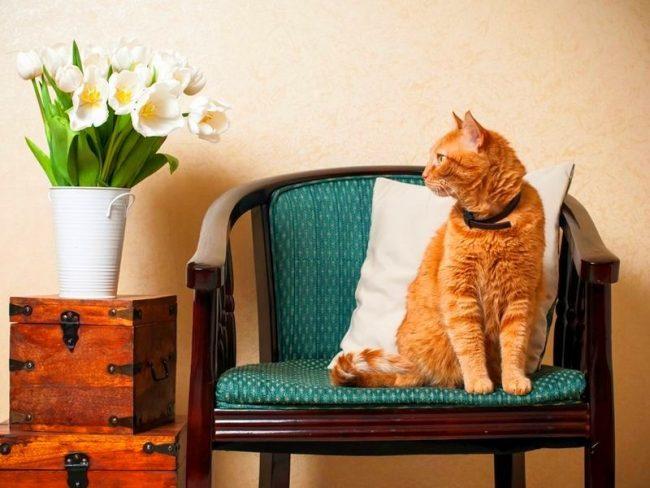 Ошейник от блох и клещей для кошек - значительно недорогое и простое в использовании средство, способное обеспечить эффективную профилактику от паразитов