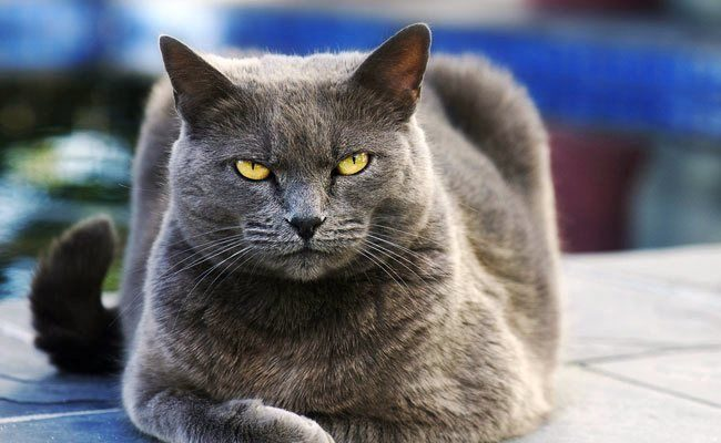 Не хочешь нарваться на неприятности - не обижай кота