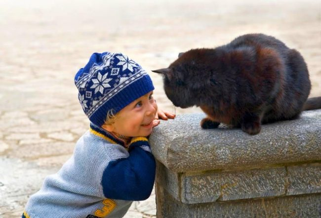 А вот дворовые коты не боятся смотреть вам в глаза