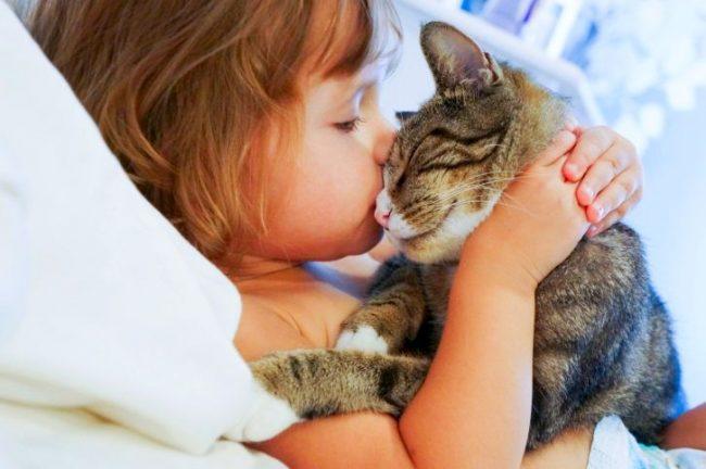 Считается, что нельзя целовать кота в морду. Таким образом он забирает частичку вашей энергии