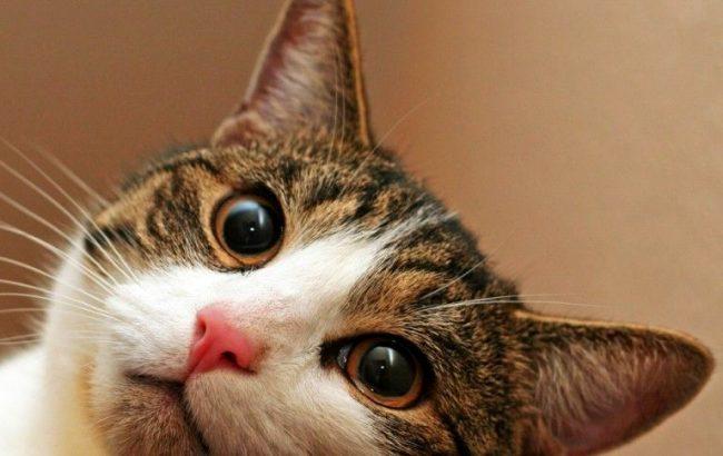 Чем больше тайн кроется вокруг четвероногих друзей, тем больше нам хочется искать ответы на многие вопросы, связанные с ними. Например, почему нельзя смотреть кошке в глаза