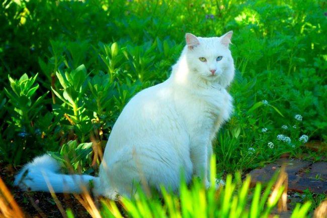 Кошка легко усваивает правила поведения и без проблем приспосабливается к новым условиям
