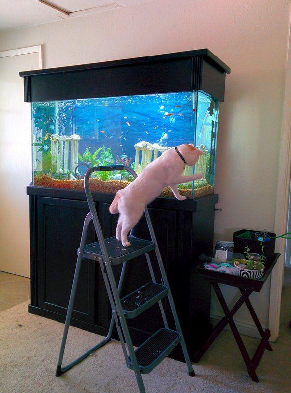 - Эй, рыбы! Выходите гулять!