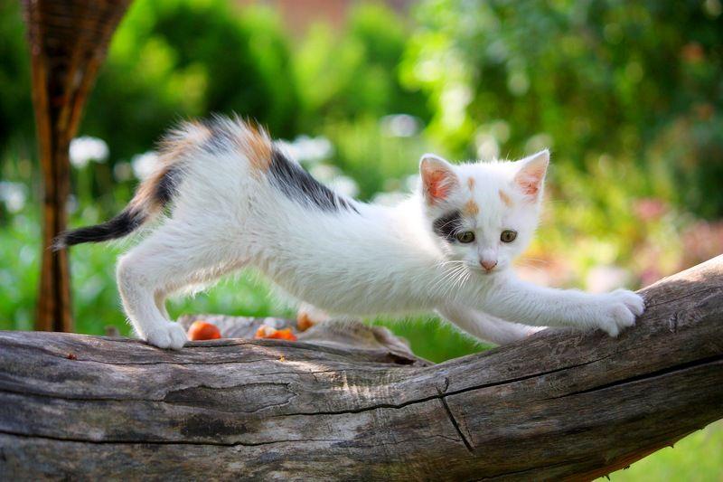 Ушной клещ у кошек: симптомы и методы лечения