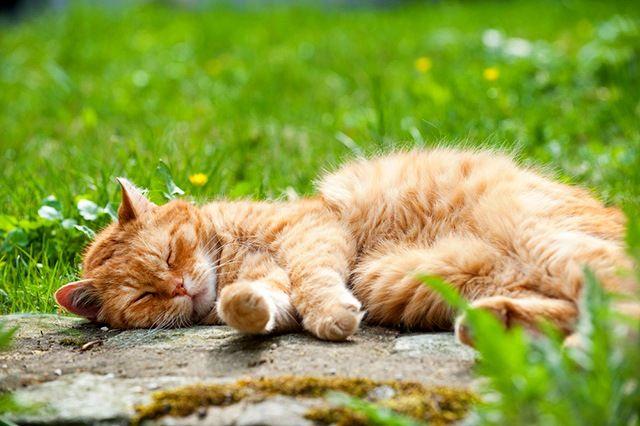 Ушной клещ у кошек может появиться при контакте с больным животным. Не стоит забывать, что человек тоже может быть переносчиком болезни. Например, после того, как погладил зараженного кота