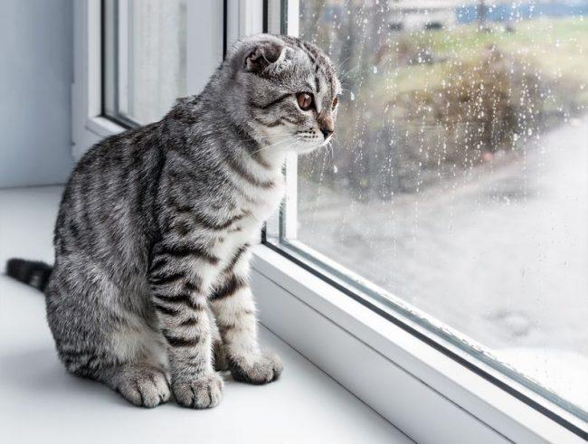 Нужно помнить, что убежавшие на коврики или мебель клещи, могут снова вернуться к своему хозяину. Повторное заражение кошек очень вероятно. Потребуется влажная уборка всех помещений со средствами против клещей