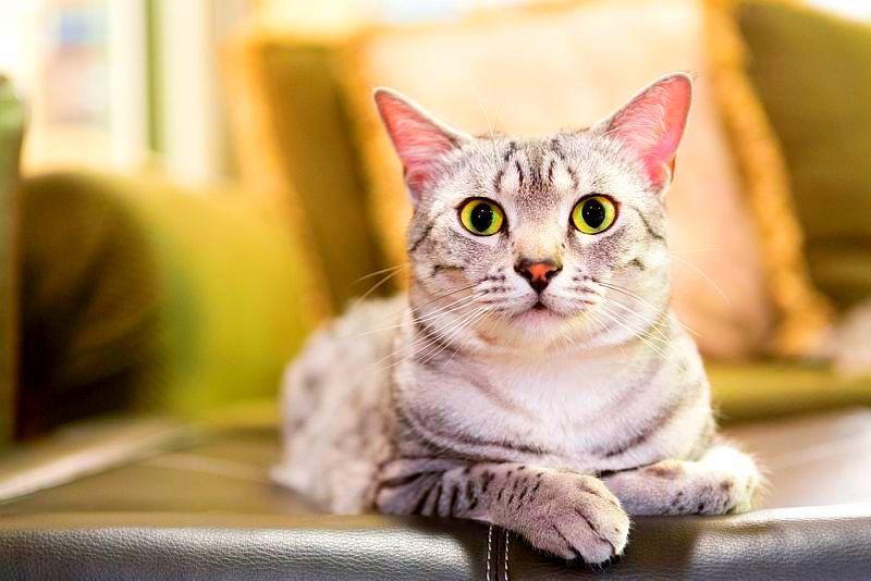 Выбираем закрытый кошачий туалет  модельный ряд за и против