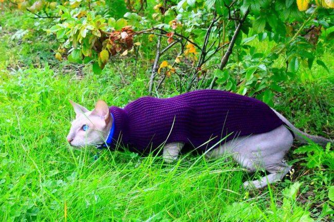 Рекомендуется с осени до весны выводить животное на улицу в специальной одежде, защищающей его голенькое тельце от холодного ветра и воды