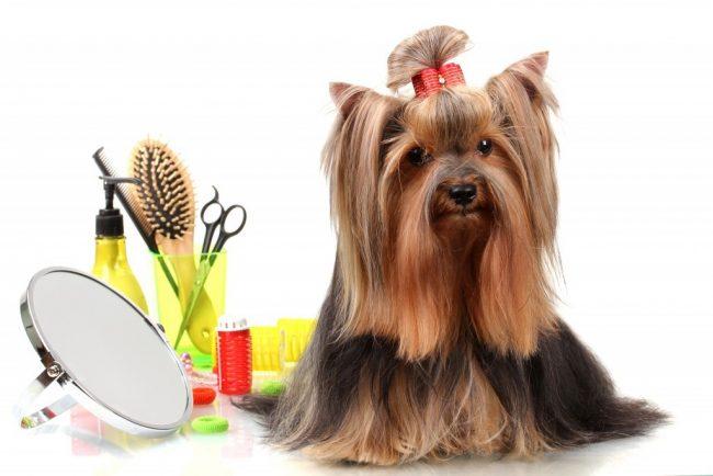 фото груминг собак