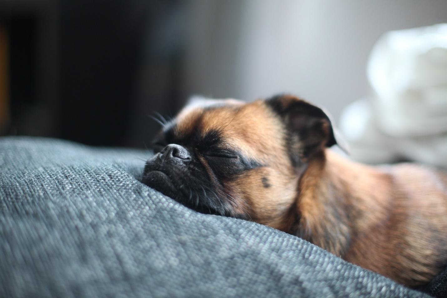 Сонник умирающая собака фото