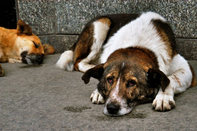 Отпугиватель собак