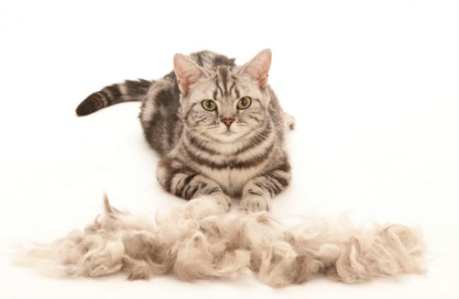 Отпугиватель кошек домашний отпугиватель комаров бесплатно в сотовом