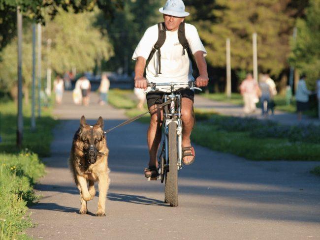 Чем травят собак догхантеры