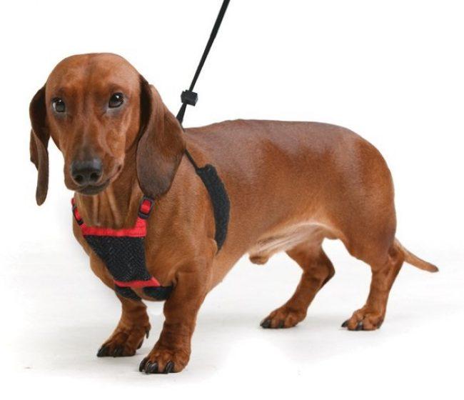 Ошейник шлейка для собак своими руками