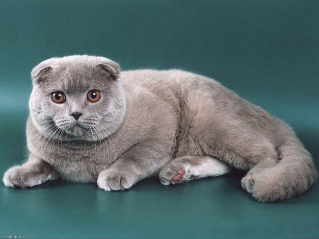 Фурминатор для кошек