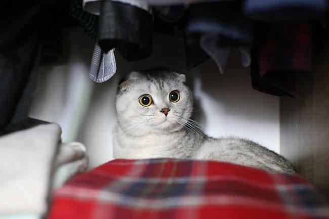 Уборка квартиры с домашними животными