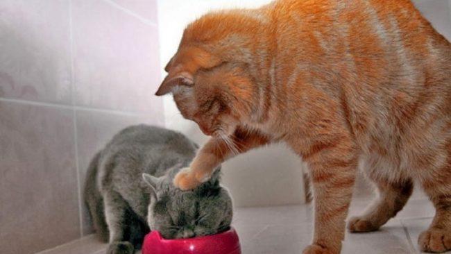 корм хиллс для кошек отзывы