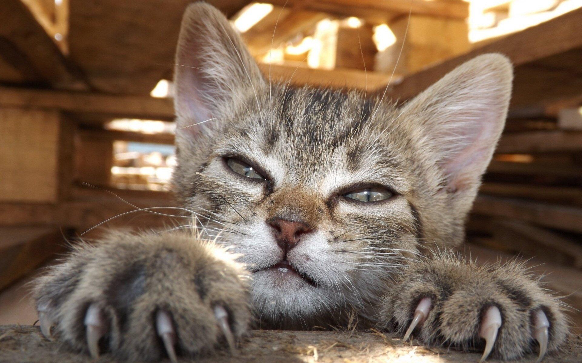 Как правильно подстричь кошке когти в домашних условиях?