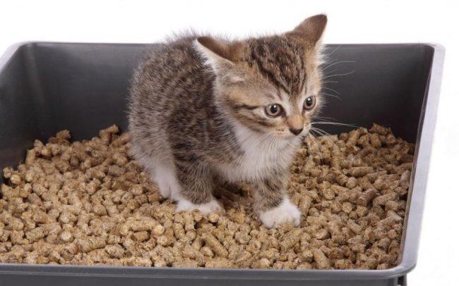 Кошачий наполнитель для туалета