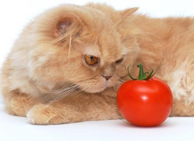 Пурина Ван для кошек