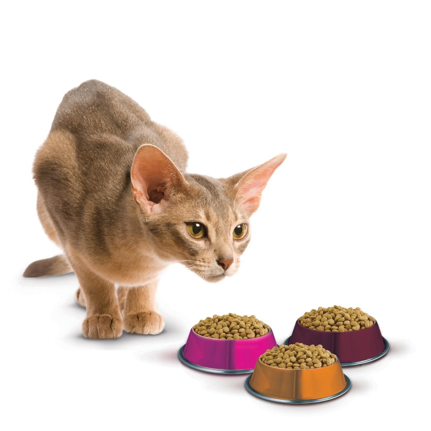Сколько раз в день лучше кормить кошку