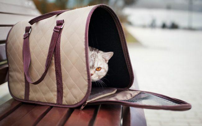 60ece28babc4 Сумка-переноска для кошек: Комфортное путешествие для питомца