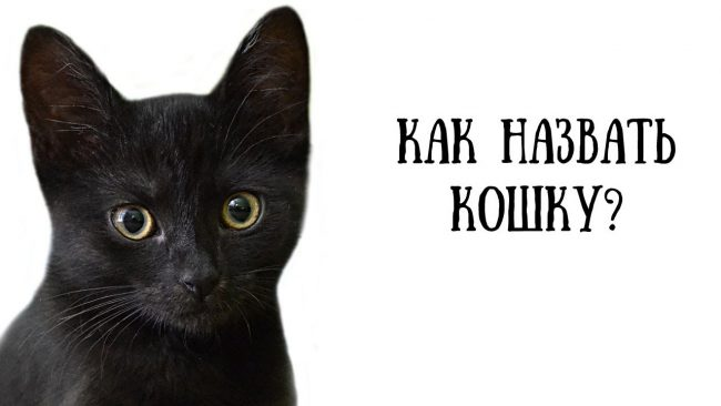 Как назвать котенка девочку