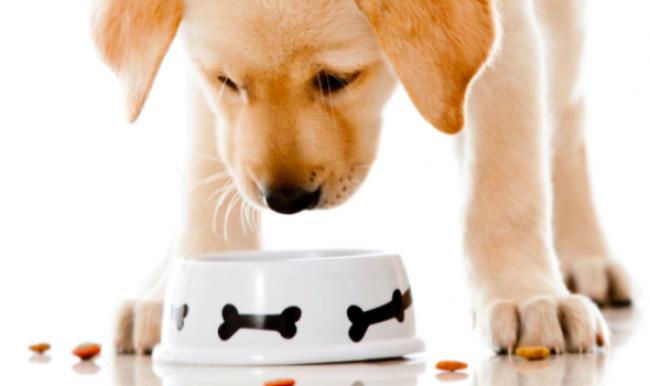 Корма для собак щенков премиум класса